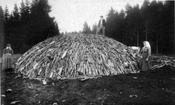 Once covered with turf and leaves, charcoal piles (here circa 1890) could contain 20 to 30 tonnes of wood and rise several metres high. The largest ones could burn for more than 30 days. (Click to view larger version...)