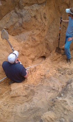 Digging up a gopher tortoise's burrow. (Click to view larger version...)