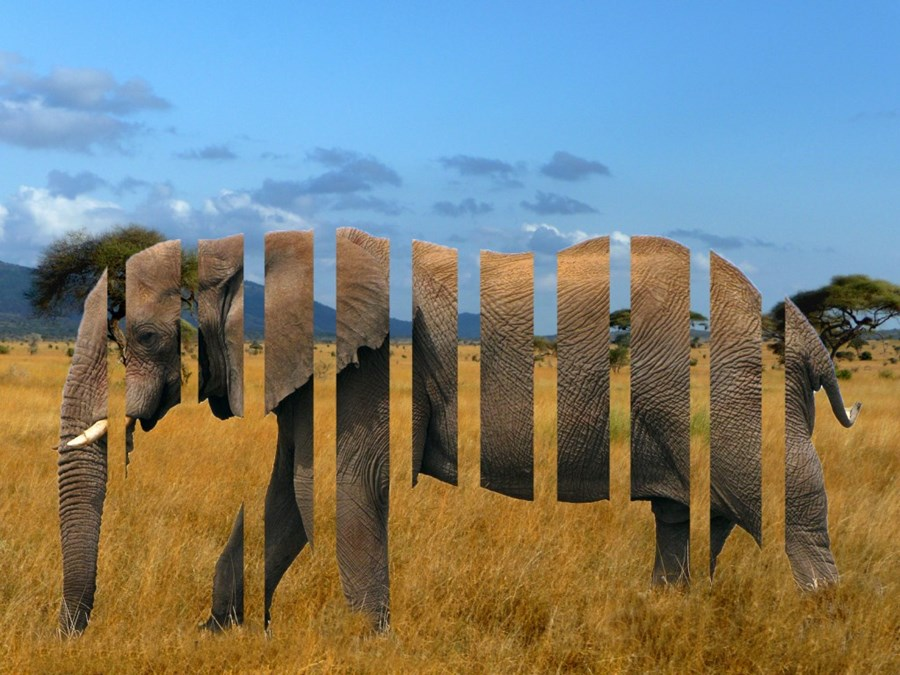 project management the elephant must be sliced
